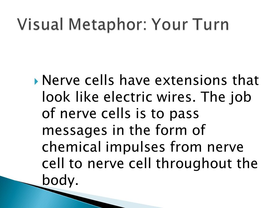  Nerve cells have extensions that look like electric wires. The job of nerve cells is to pass messages in the form of chemical impulses from nerve ce