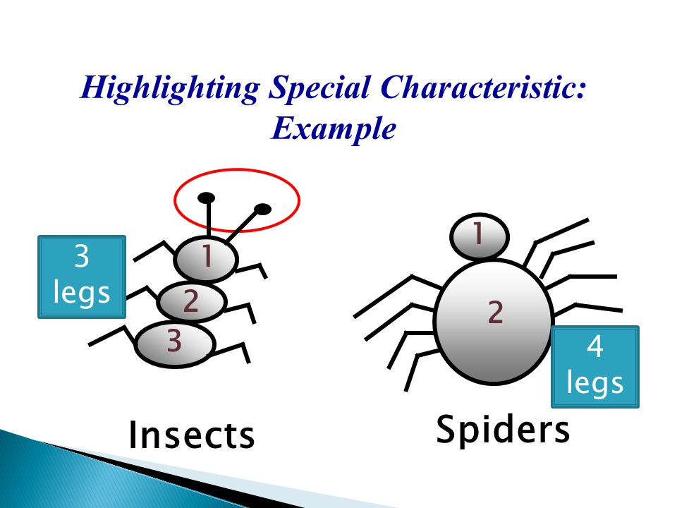 Highlighting Special Characteristic: Example Insects Spiders 3 legs 4 legs 1 2 1 2 3