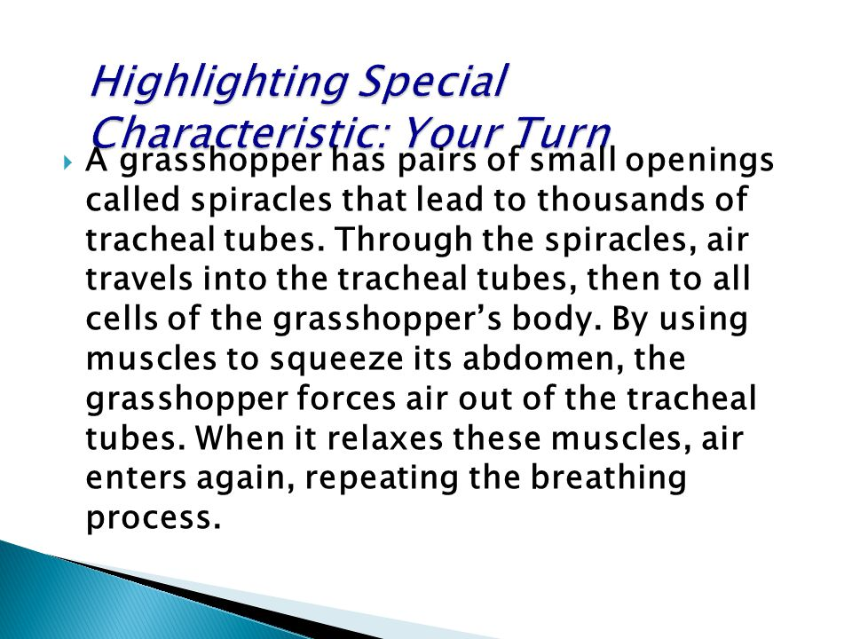  A grasshopper has pairs of small openings called spiracles that lead to thousands of tracheal tubes. Through the spiracles, air travels into the tra