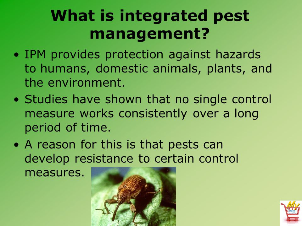How are the types of pests identified and described.