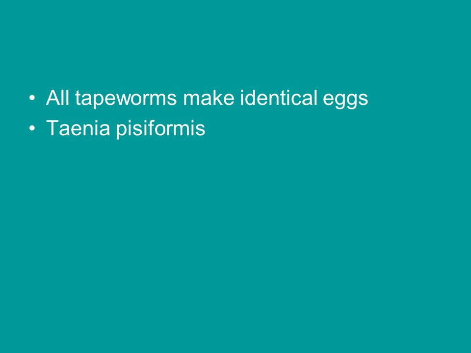 All tapeworms make identical eggs Taenia pisiformis