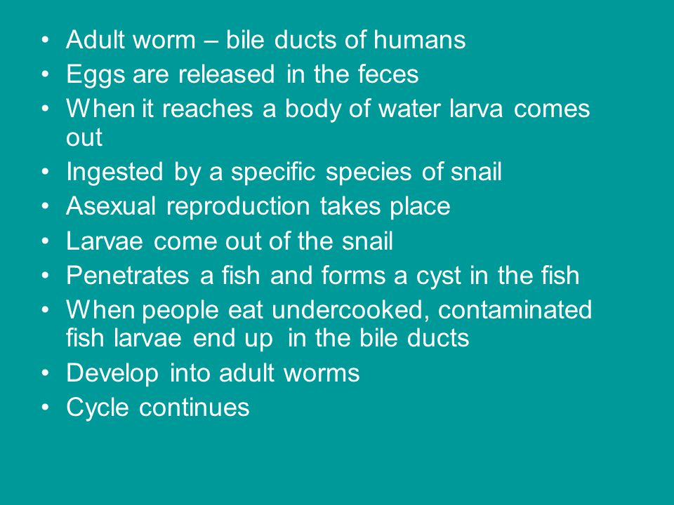 Adult worm – bile ducts of humans Eggs are released in the feces When it reaches a body of water larva comes out Ingested by a specific species of snail Asexual reproduction takes place Larvae come out of the snail Penetrates a fish and forms a cyst in the fish When people eat undercooked, contaminated fish larvae end up in the bile ducts Develop into adult worms Cycle continues