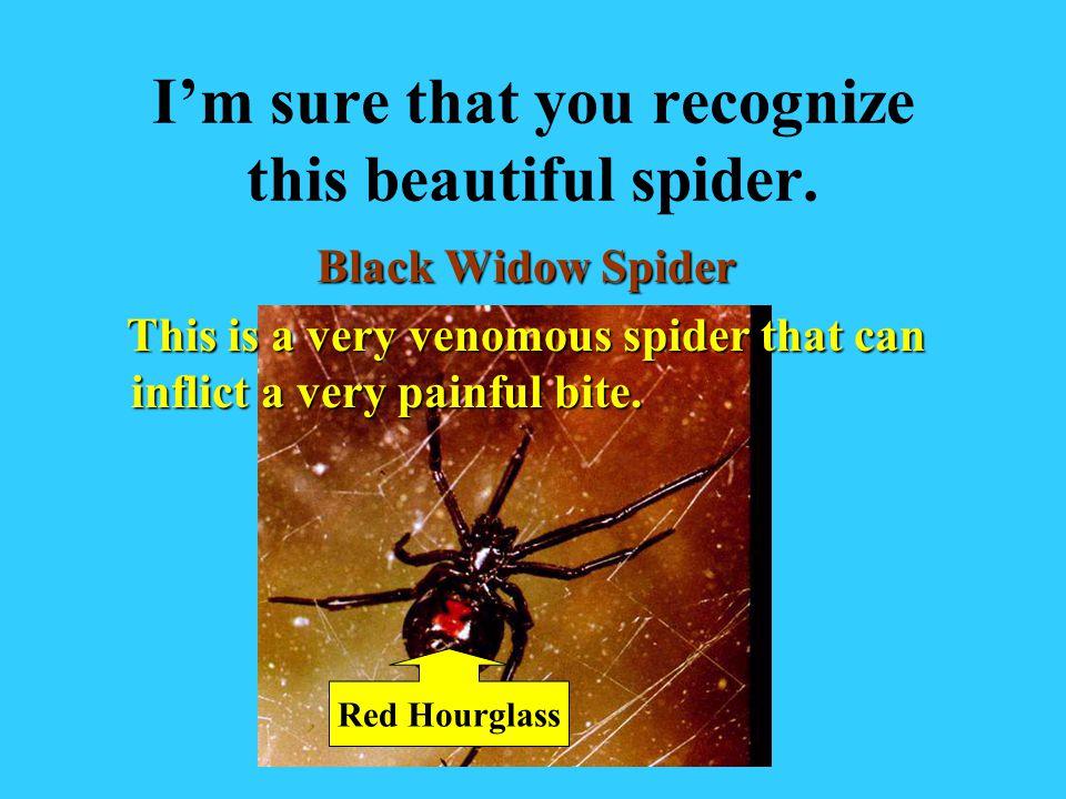 Mites are Arachnids too!
