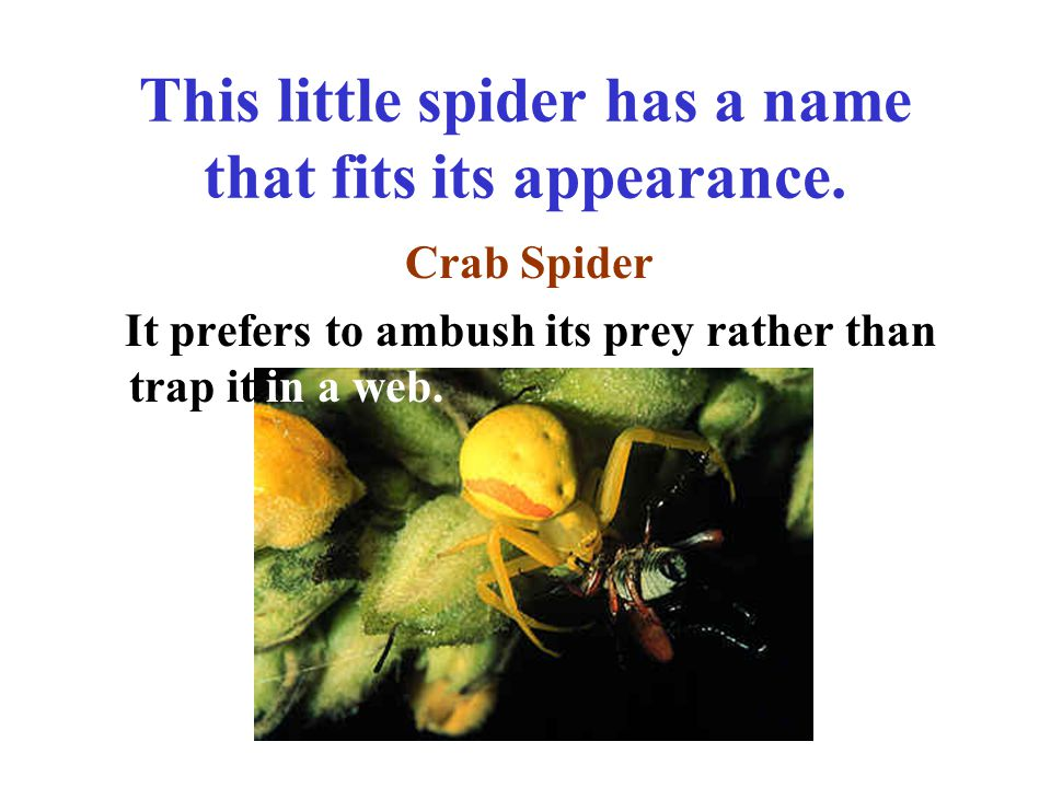 This is a beautiful spider commonly seen in late summer. Garden Spider