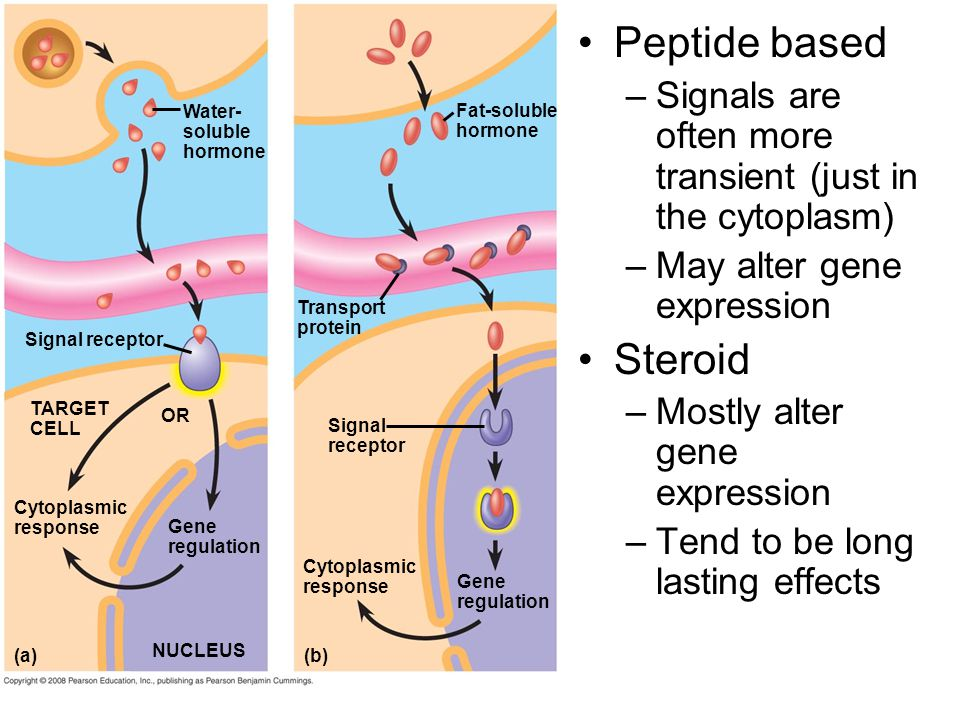 Signal receptor TARGET CELL Signal receptor Transport protein Water- soluble hormone Fat-soluble hormone Gene regulation Cytoplasmic response Gene reg