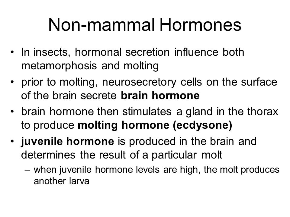 Non-mammal Hormones In insects, hormonal secretion influence both metamorphosis and molting prior to molting, neurosecretory cells on the surface of t