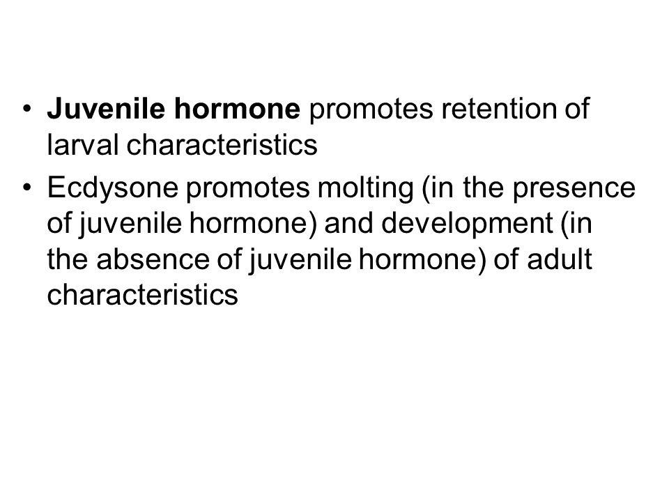 Juvenile hormone promotes retention of larval characteristics Ecdysone promotes molting (in the presence of juvenile hormone) and development (in the