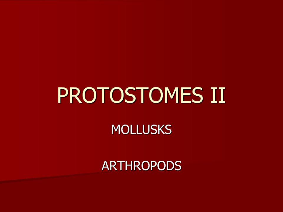 PROTOSTOMES II MOLLUSKSARTHROPODS