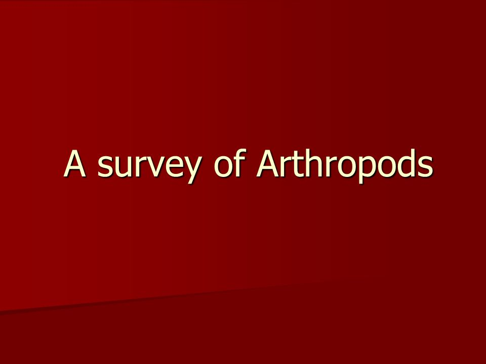 A survey of Arthropods A survey of Arthropods