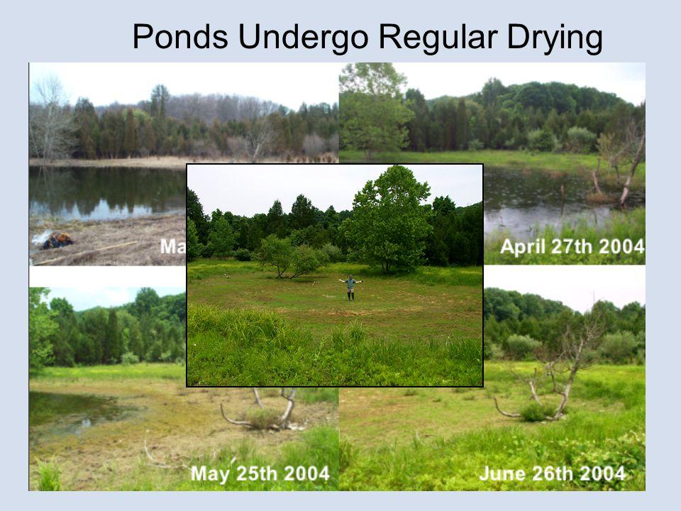 Ponds Undergo Regular Drying