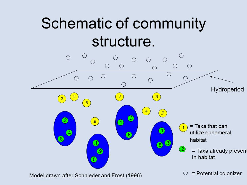 Schematic of community structure..2.4.9.6.7.1.3.2.5 Hydroperiod.8.3.1.5.2.1.8.9.4.6.2 = Taxa that can utilize ephemeral habitat = Taxa already present In habitat = Potential colonizer Model drawn after Schnieder and Frost (1996)