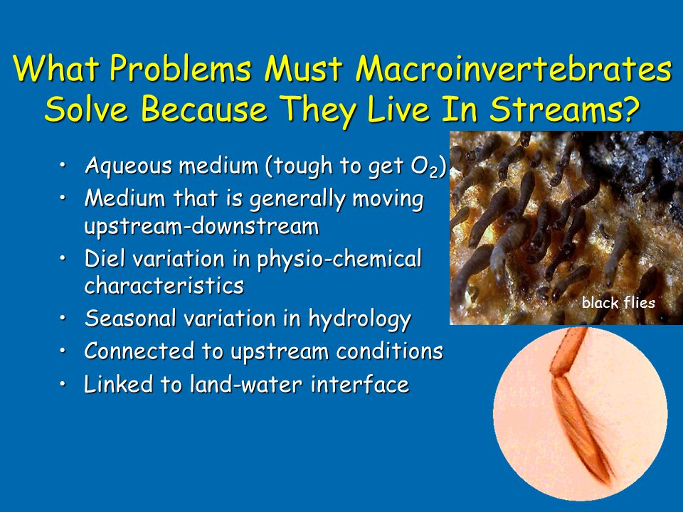What Problems Must Macroinvertebrates Solve Because They Live In Streams.