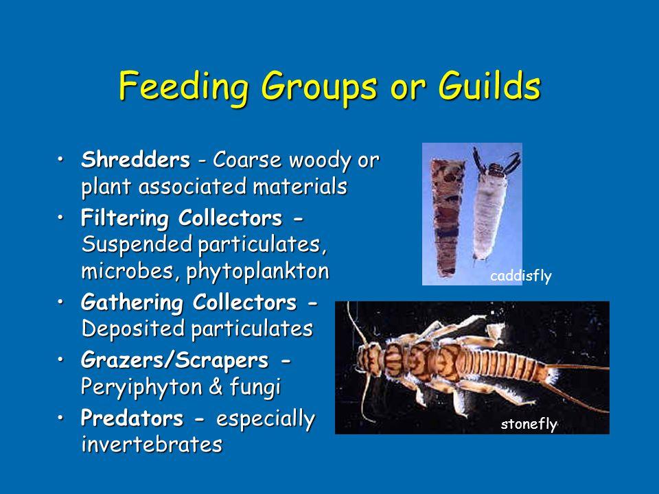 Feeding Groups or Guilds Shredders - Coarse woody or plant associated materialsShredders - Coarse woody or plant associated materials Filtering Collec