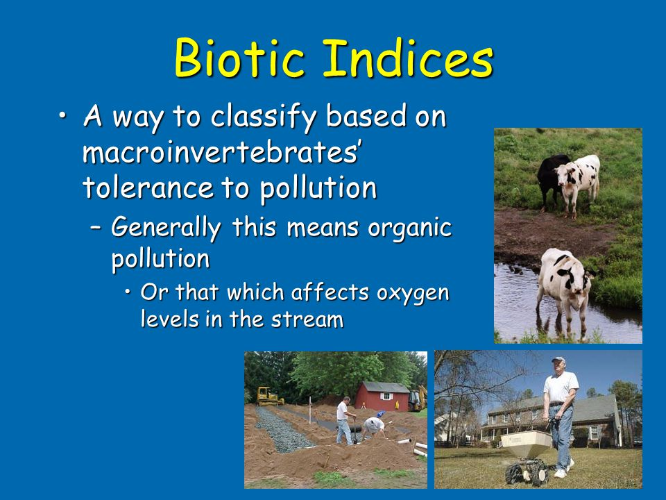 Biotic Indices A way to classify based on macroinvertebrates' tolerance to pollutionA way to classify based on macroinvertebrates' tolerance to pollut