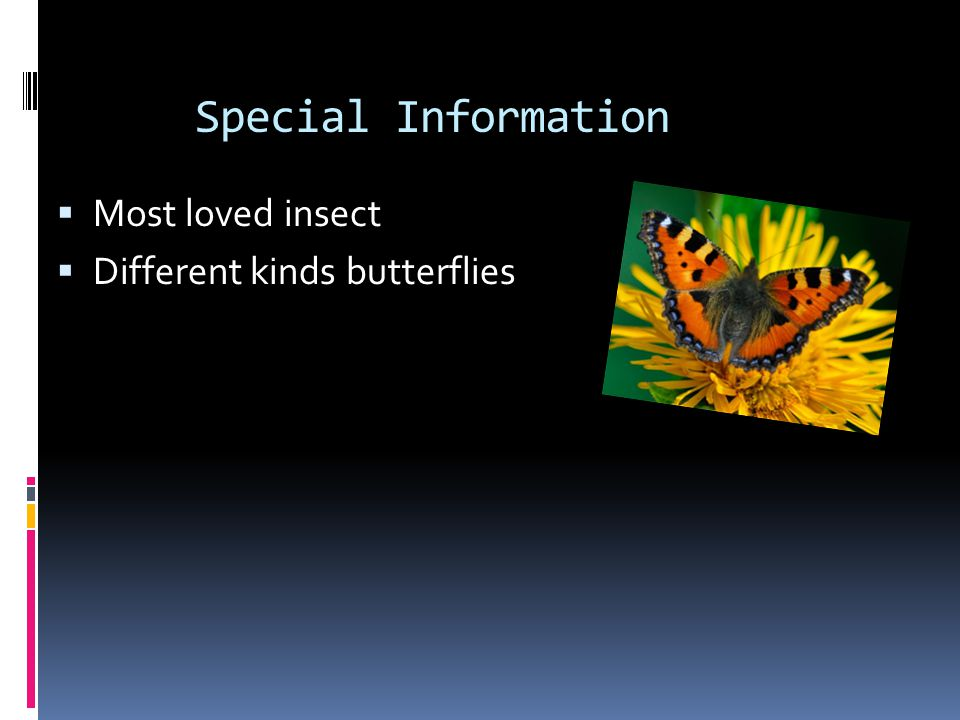 Butterfly Life Cycle  Eggs are tiny.  A butterfly lays eggs.  Eggs are under leaves.  The butterfly lays eggs, then the eggs hatch.  The larva ea