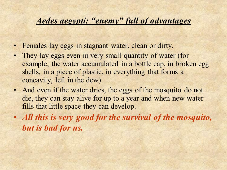 """Aedes aegypti: """"enemy"""" full of advantages Females lay eggs in stagnant water, clean or dirty. They lay eggs even in very small quantity of water (for"""