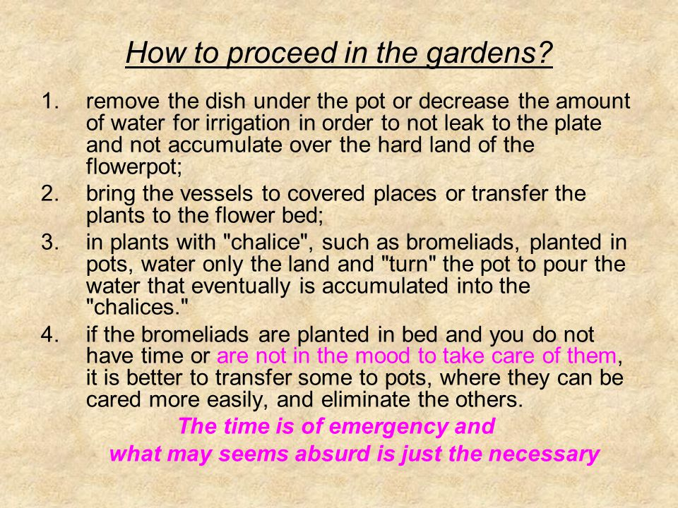 How to proceed in the gardens? 1.remove the dish under the pot or decrease the amount of water for irrigation in order to not leak to the plate and no