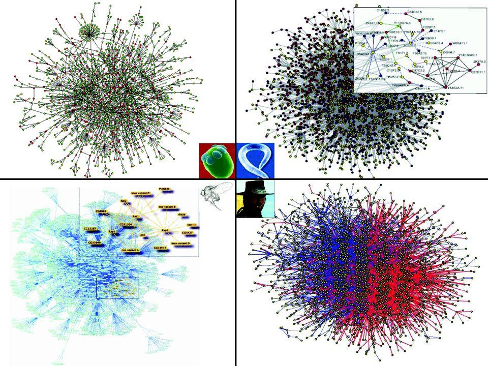 3 3 PPI Network