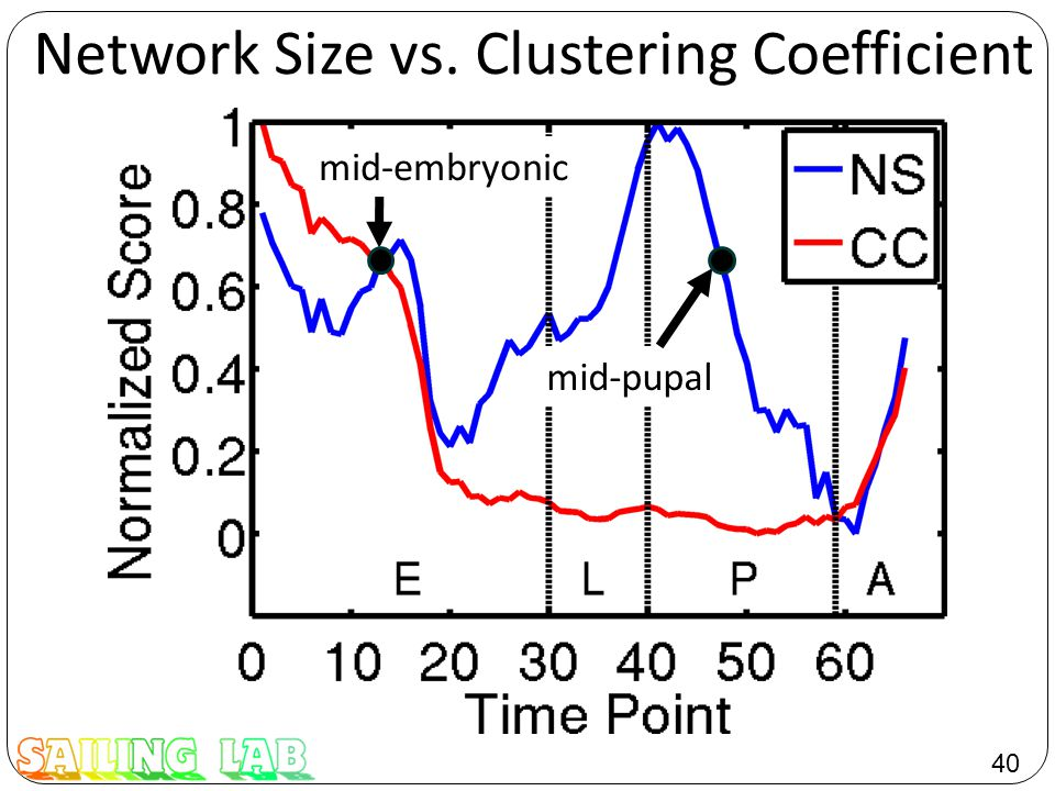 40 Network Size vs. Clustering Coefficient mid-embryonic mid-pupal