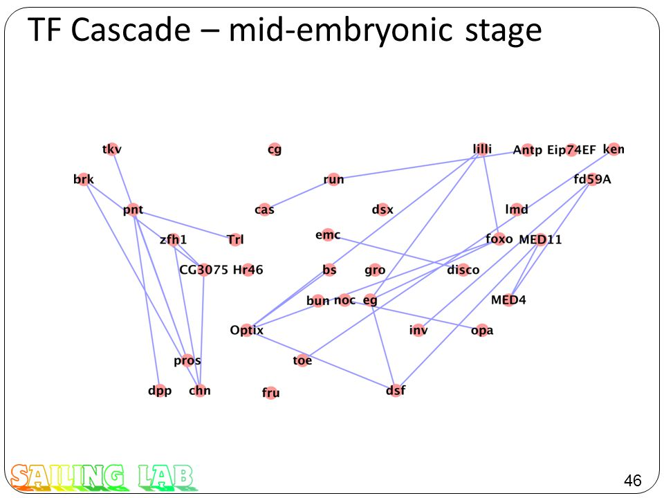 46 TF Cascade – mid-embryonic stage