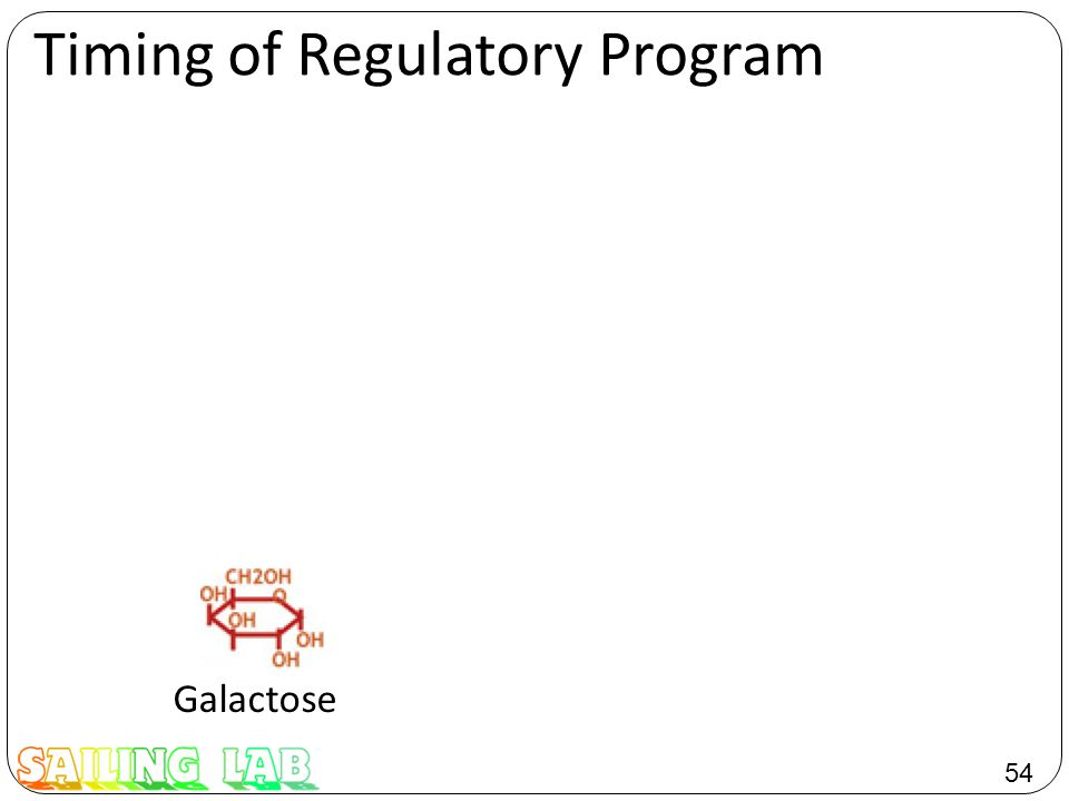 54 Timing of Regulatory Program Galactose