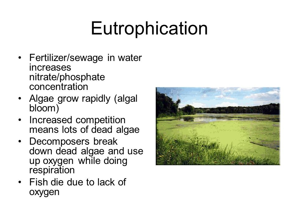 Eutrophication Fertilizer/sewage in water increases nitrate/phosphate concentration Algae grow rapidly (algal bloom) Increased competition means lots