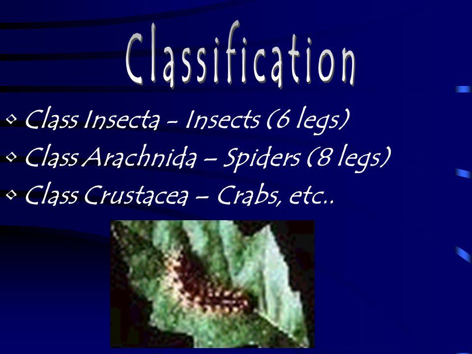 Abdomen The last body region is called the abdomen.