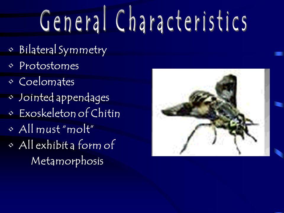 Termites - good or bad.