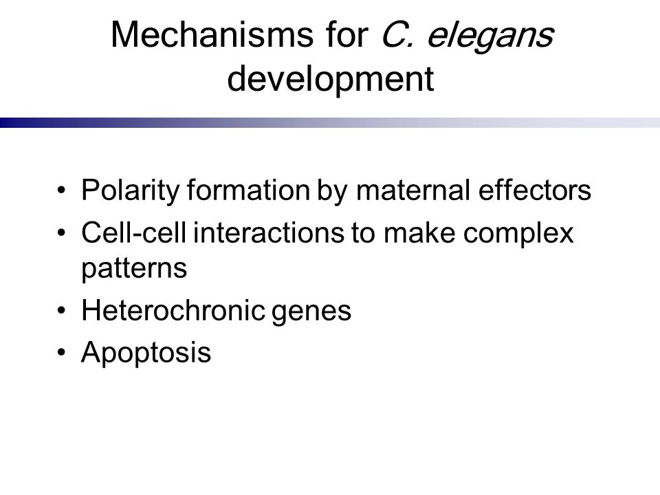 Mechanisms for C. elegans development Polarity formation by maternal effectors Cell-cell interactions to make complex patterns Heterochronic genes Apo