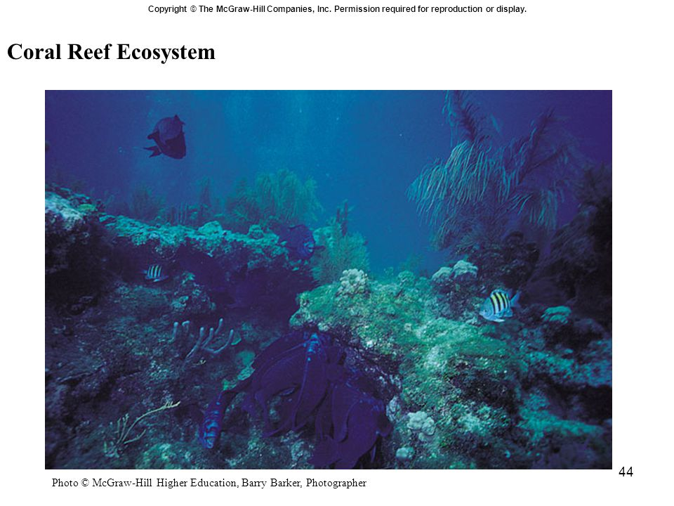 44 Coral Reef Ecosystem Copyright © The McGraw-Hill Companies, Inc. Permission required for reproduction or display. Photo © McGraw-Hill Higher Educat