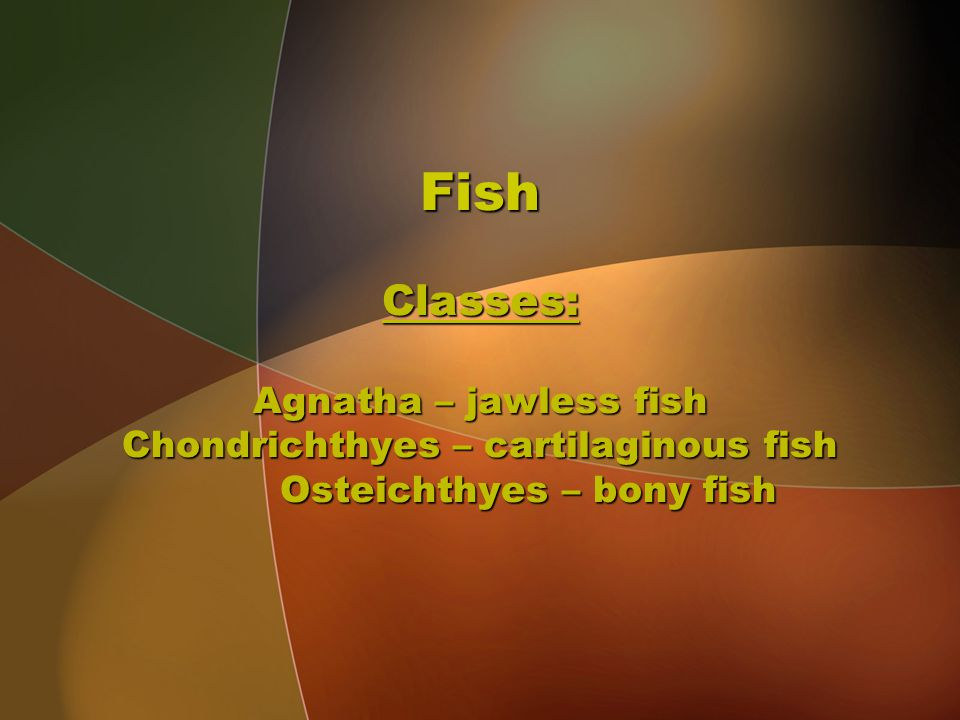 Fish Classes: Agnatha – jawless fish Chondrichthyes – cartilaginous fish Osteichthyes – bony fish