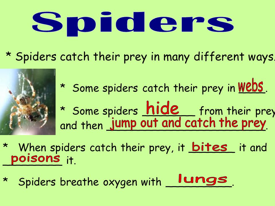 * Spiders catch their prey in many different ways. * Some spiders catch their prey in ____. * Some spiders ________ from their prey and then _________