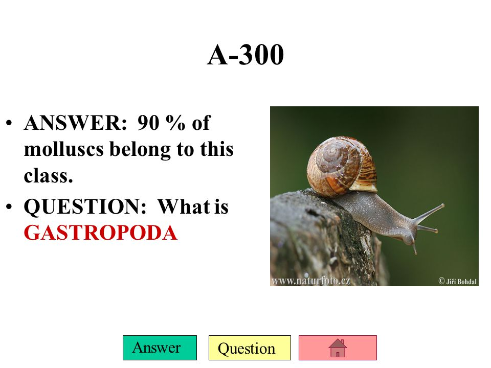Question Answer A-200 ANSWER: This rasp- like molluscan structure is used for obtaining food.