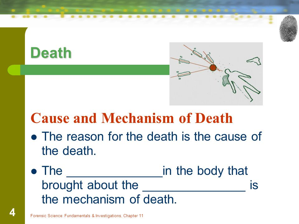 Forensic Science: Fundamentals & Investigations, Chapter 11 4 Death Cause and Mechanism of Death The reason for the death is the cause of the death.