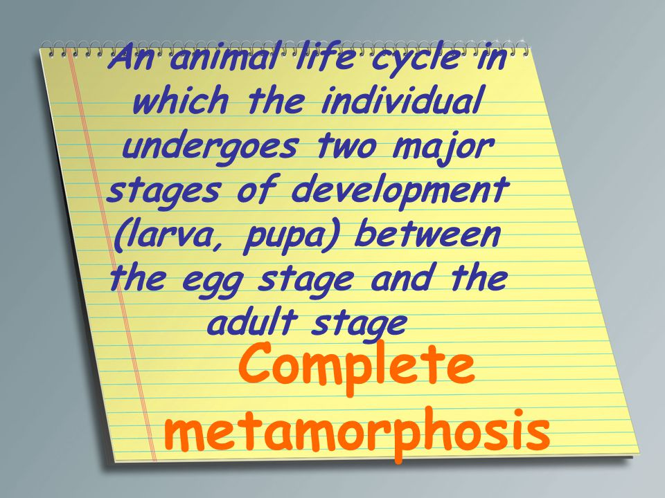 An animal life cycle in which the individual undergoes two major stages of development (larva, pupa) between the egg stage and the adult stage Complet