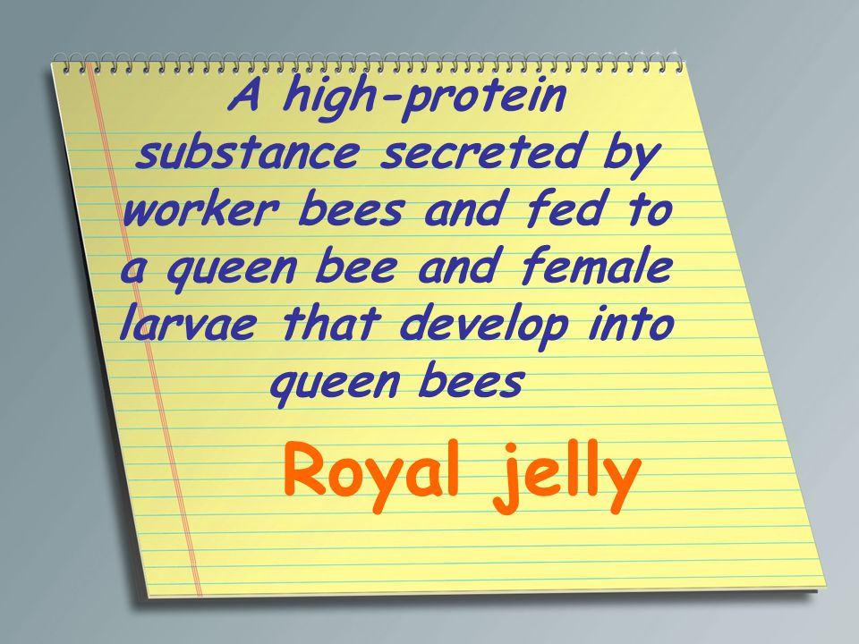 A high-protein substance secreted by worker bees and fed to a queen bee and female larvae that develop into queen bees Royal jelly
