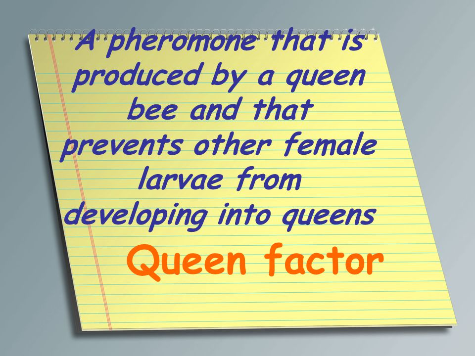 A pheromone that is produced by a queen bee and that prevents other female larvae from developing into queens Queen factor