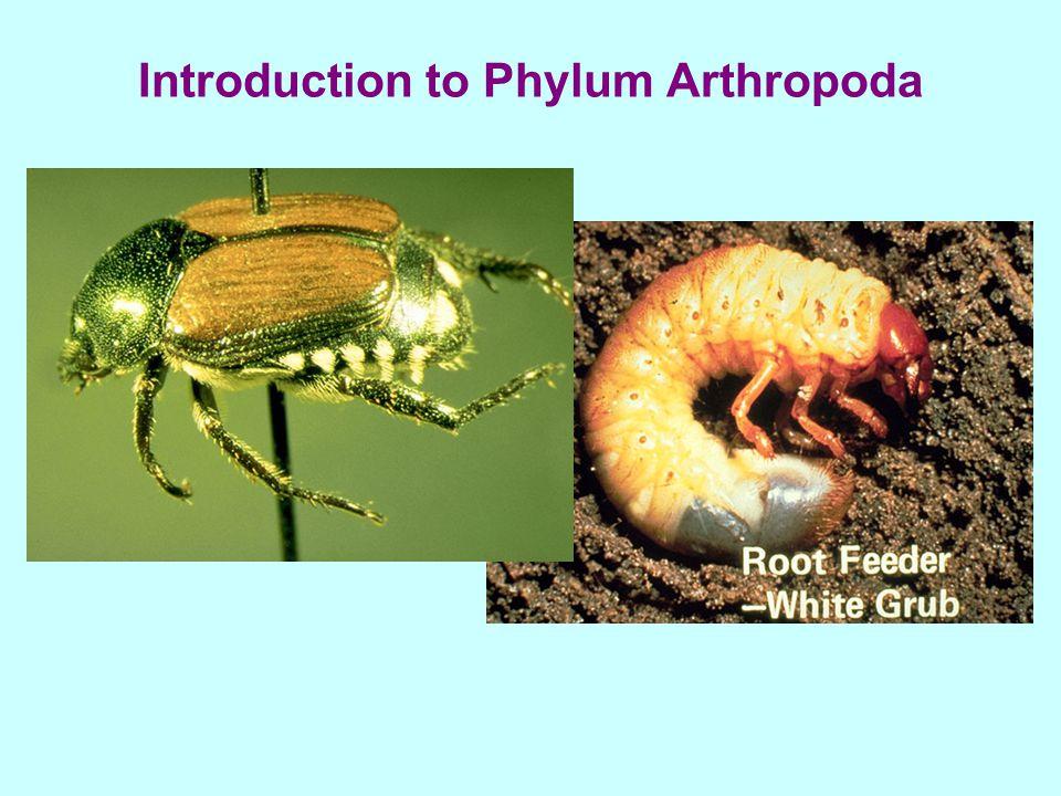 Introduction to Phylum Arthropoda