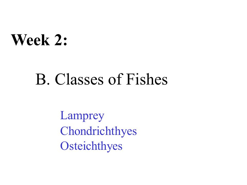 Week 2: B. Classes of Fishes Lamprey Chondrichthyes Osteichthyes