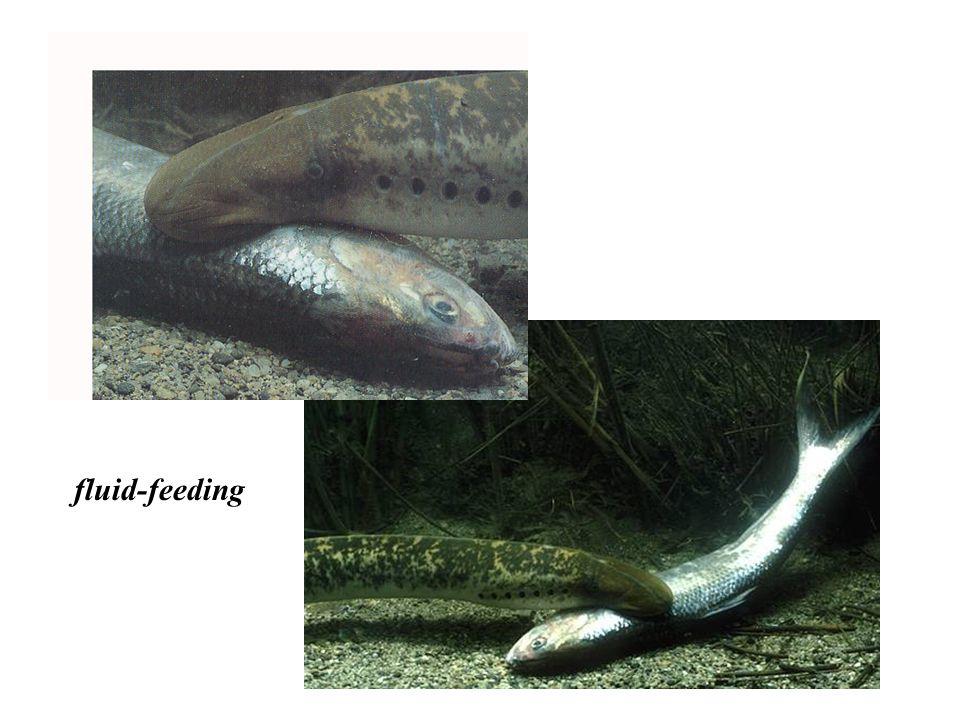 fluid-feeding