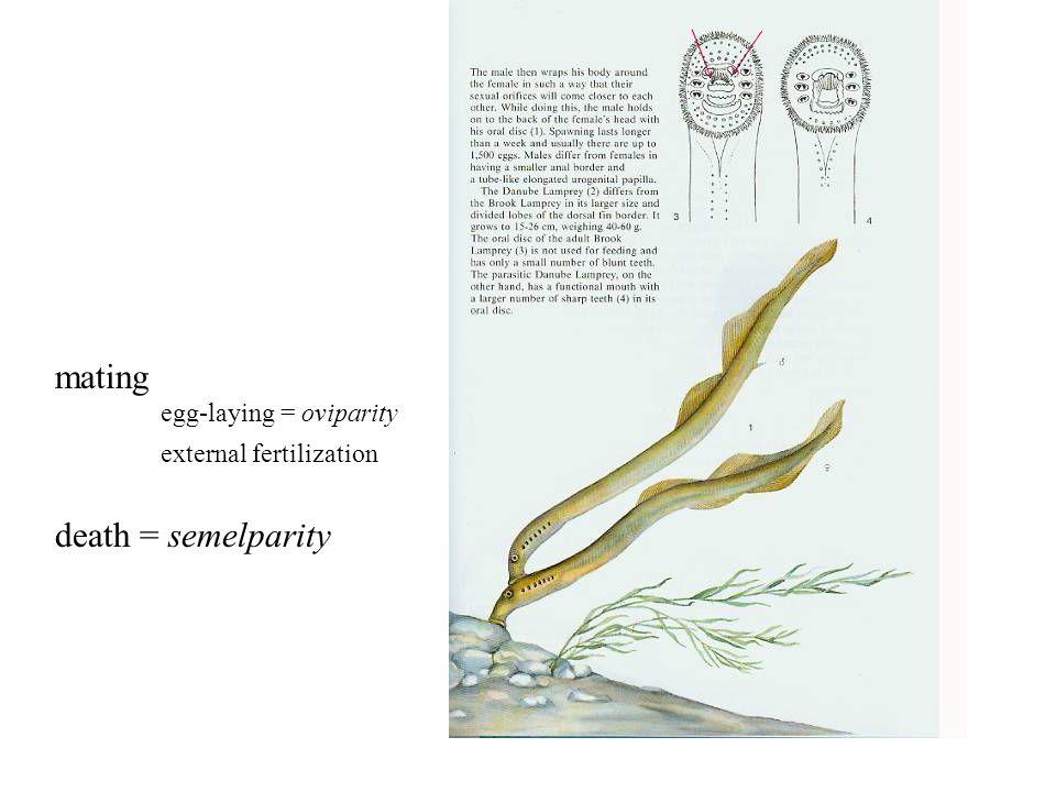 mating egg-laying = oviparity external fertilization death = semelparity