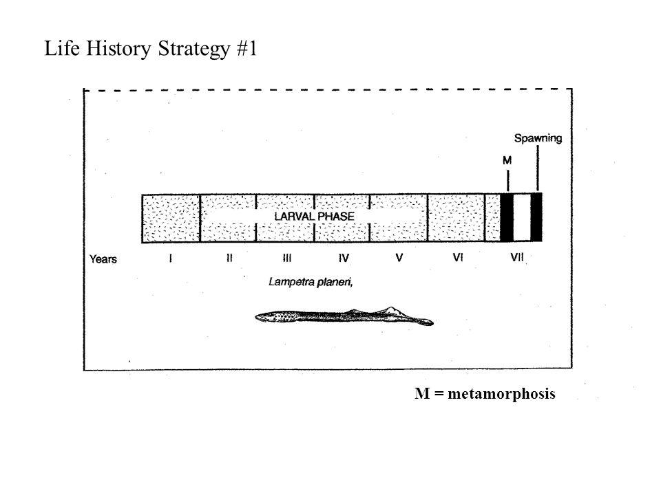 M = metamorphosis Life History Strategy #1