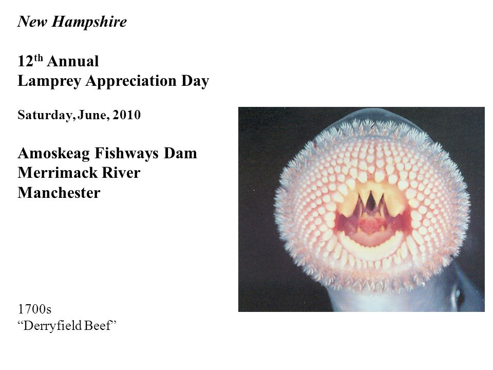 New Hampshire 12 th Annual Lamprey Appreciation Day Saturday, June, 2010 Amoskeag Fishways Dam Merrimack River Manchester 1700s Derryfield Beef