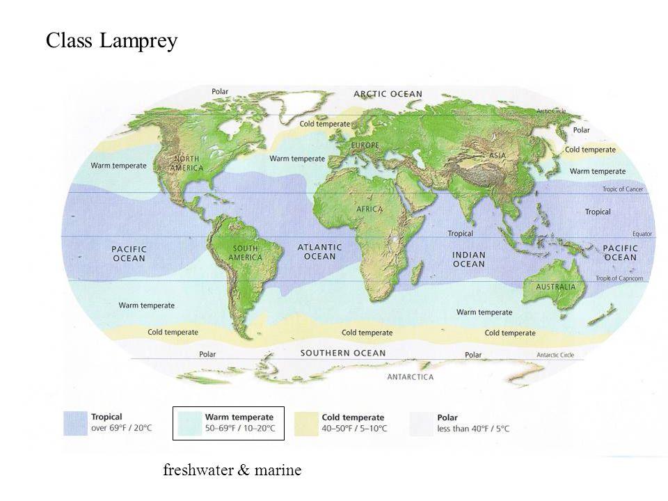 Class Lamprey freshwater & marine