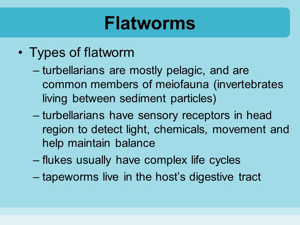 Flatworms Types of flatworm –turbellarians are mostly pelagic, and are common members of meiofauna (invertebrates living between sediment particles) –