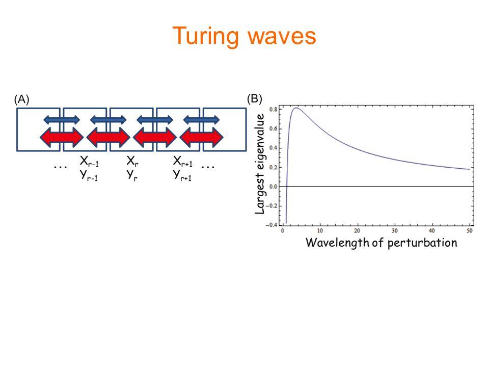 Turing waves