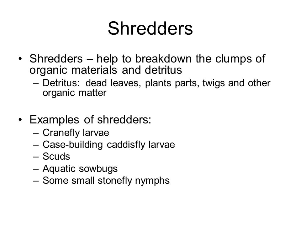 Shredders Shredders – help to breakdown the clumps of organic materials and detritus –Detritus: dead leaves, plants parts, twigs and other organic mat