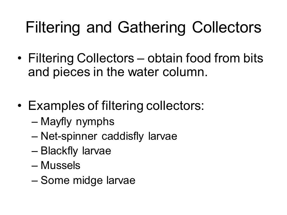 Filtering and Gathering Collectors Gathering Collectors – obtain food from the stream bottom Examples of gathering collectors: –Some mayfly nymphs –Some caddisfly larvae –Some midge larvae
