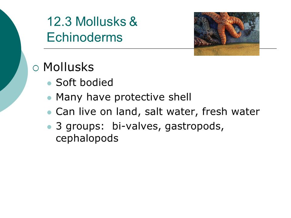 12.3 Mollusks & Echinoderms  Mollusks Soft bodied Many have protective shell Can live on land, salt water, fresh water 3 groups: bi-valves, gastropods, cephalopods