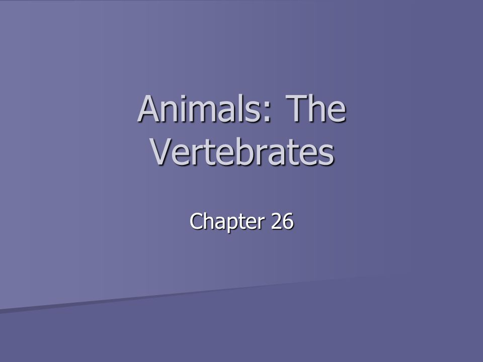 Animals: The Vertebrates Chapter 26